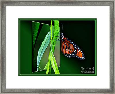 Monarch Butterfly 04 Framed Print by Thomas Woolworth
