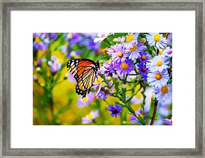 Monarch Butterfly 4 Framed Print