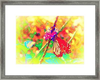 Monarch Butterfly  Framed Print by David Mckinney