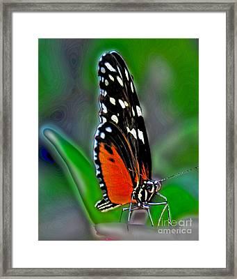 Monarch Butterfly Framed Print by Dawn Gari