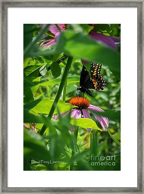 Monarch Butterfly Deep In The Jungle Framed Print