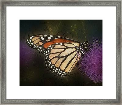 Monarch Butterfly Framed Print by Jack Zulli