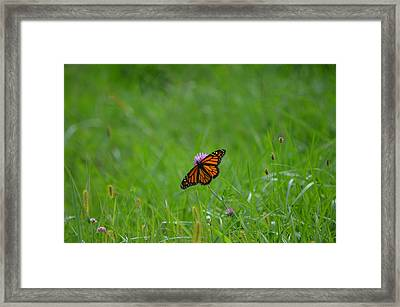 Framed Print featuring the photograph Monarch Butterfly by James Petersen