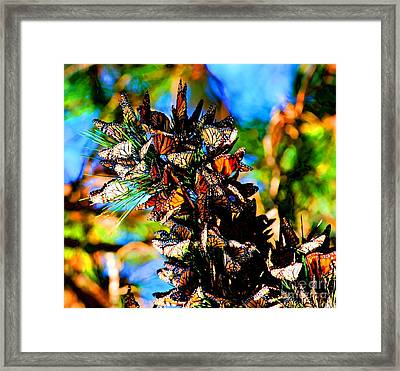 Monarch Butterfly Migration Framed Print by Tap On Photo