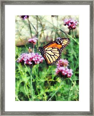 Monarch Butterfly On Pink Lantana Framed Print by Susan Savad