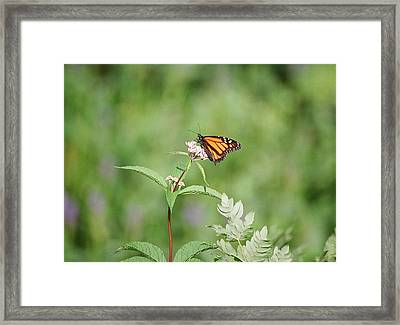 Framed Print featuring the photograph Monarch by David Porteus