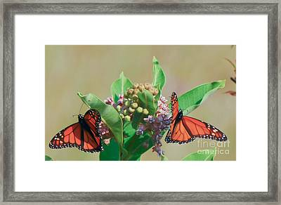 Framed Print featuring the photograph Monarch Gathering by Kerri Farley
