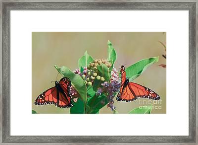 Monarch Gathering Framed Print by Kerri Farley