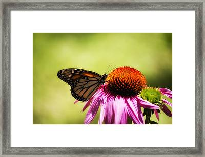 Monarch Glow Framed Print