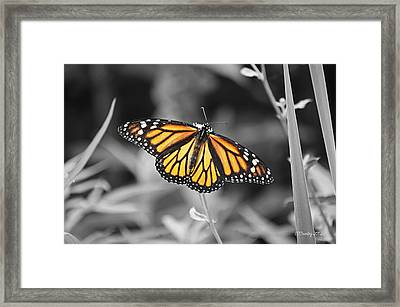 Monarch In Its Glory Framed Print