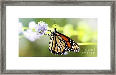Monarch Iv Framed Print by Pamela Gail Torres