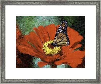 Monarch Landing Framed Print by Renee Skiba