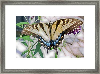 Monarch Majesty Framed Print