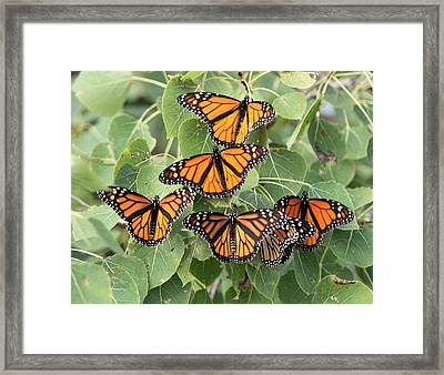 Monarch Migration Framed Print