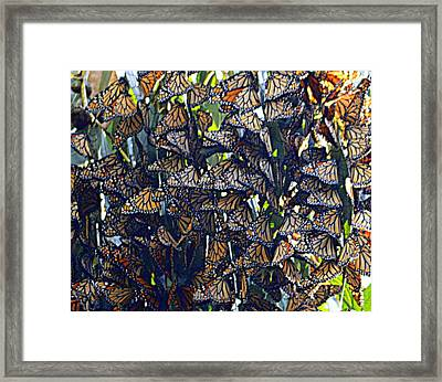 Monarch Mosaic Framed Print by AJ  Schibig