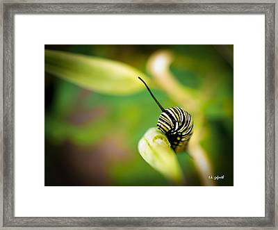 Monarch Offspring Framed Print by TK Goforth