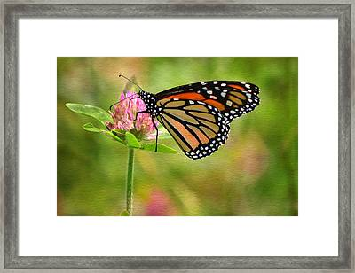 Monarch On Clover Framed Print by Ann Bridges