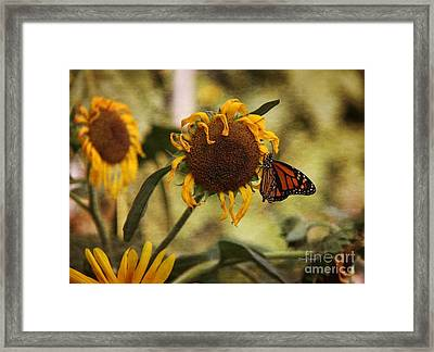 Monarch On The Sunflower Framed Print by Yumi Johnson