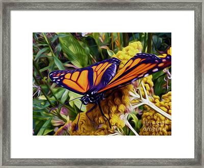 Monarch On Yarrow Framed Print