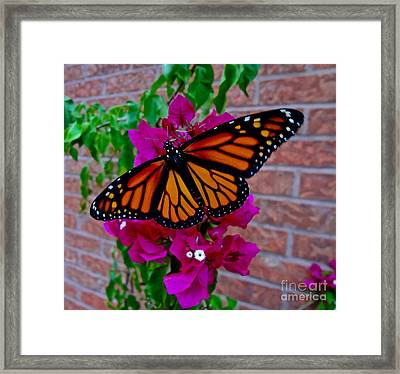Framed Print featuring the photograph Monarch by Sarah Mullin