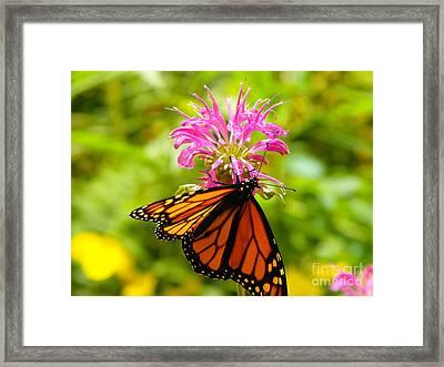 Monarch Under Flower Framed Print