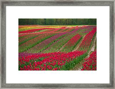 Monet Alive Framed Print