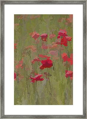 Monet Poppies Framed Print by David Letts