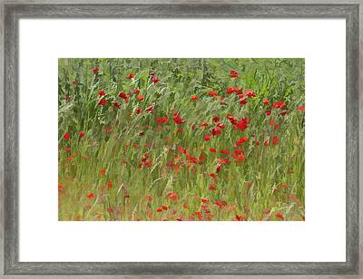 Monet Poppies IIi Framed Print