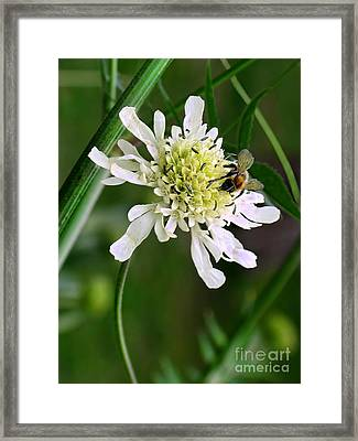 Framed Print featuring the photograph Monet's Garden Bee. Giverny by Jennie Breeze