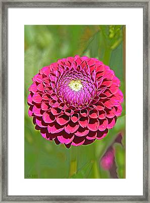 Monet's Pink Flower Framed Print by Lorella  Schoales
