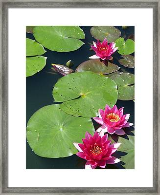 Monet's Waterlilies IIi Framed Print