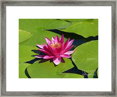 Monet's Waterlily Framed Print