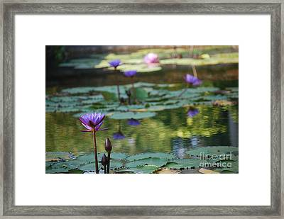 Monet's Waterlily Pond Number Two Framed Print