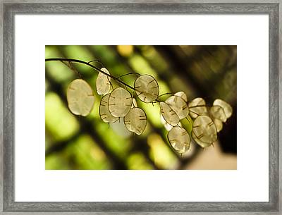 Money On Trees Framed Print