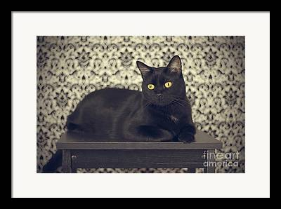 Witch Cat Framed Prints