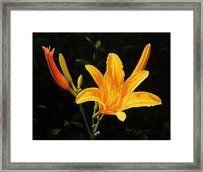 Monikas Lily Framed Print by Gary  Hernandez