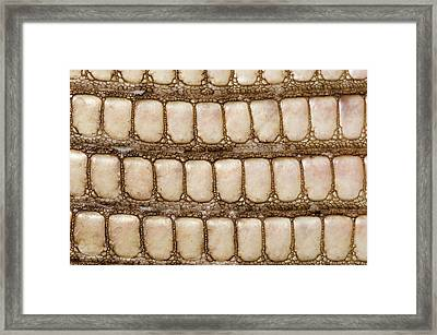 Monitor Lizard Skin Framed Print