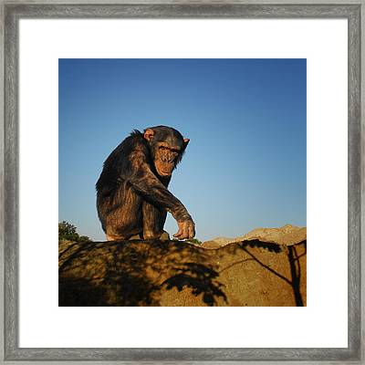 Monkey Framed Print by TouTouke A Y