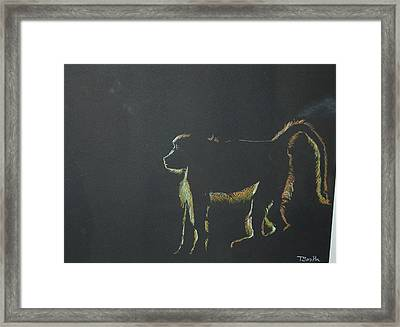 Monkey At Dawn Framed Print