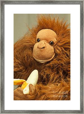 Monkey Business Framed Print by Donald Davis