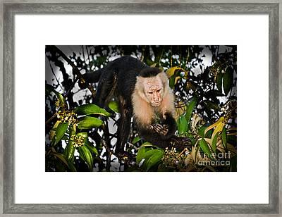 Monkey Business  Framed Print by Gary Keesler