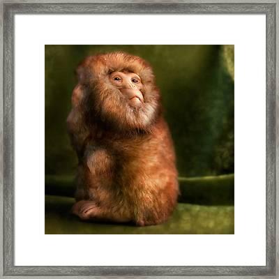 Monkey Framed Print by Diane Bradley