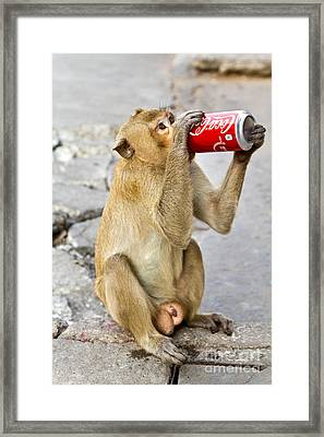 Monkey Enjoys Drinking Framed Print