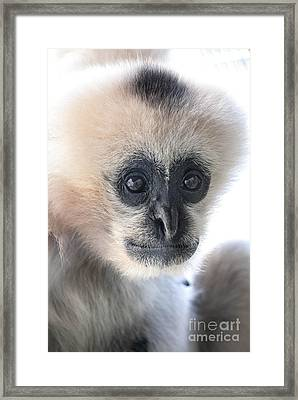 Monkey Face Framed Print
