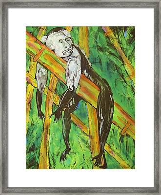 Monkey Nap Framed Print