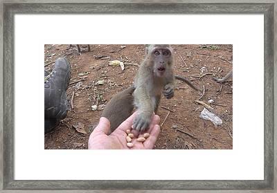 Monkey Nuts Framed Print by Carol Jadzia