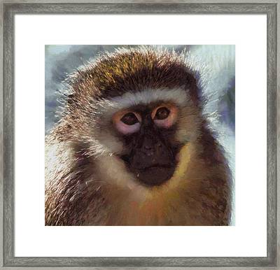 Monkey Portait Painting Framed Print by Dan Sproul