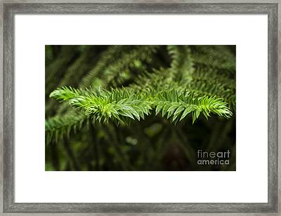 Framed Print featuring the photograph Monkey Puzzle by Maria Janicki
