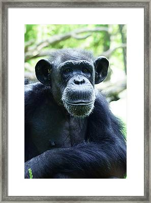 Framed Print featuring the photograph Monkey See Monkey Do by B Wayne Mullins
