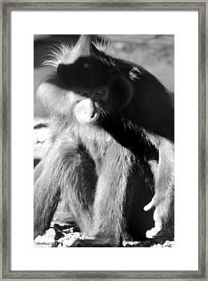 Monkey See Monkey Do Framed Print by Dick Botkin
